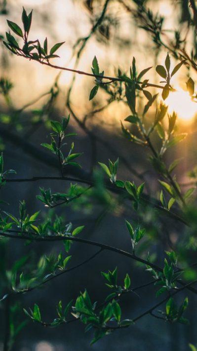 Nature-Macro-Plants-Leaves-iPhone-Wallpaper - iPhone Wallpapers