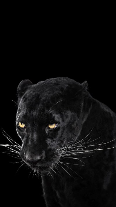 Black-Panther-Wallpaper-iPhone-Wallpaper - iPhone Wallpapers
