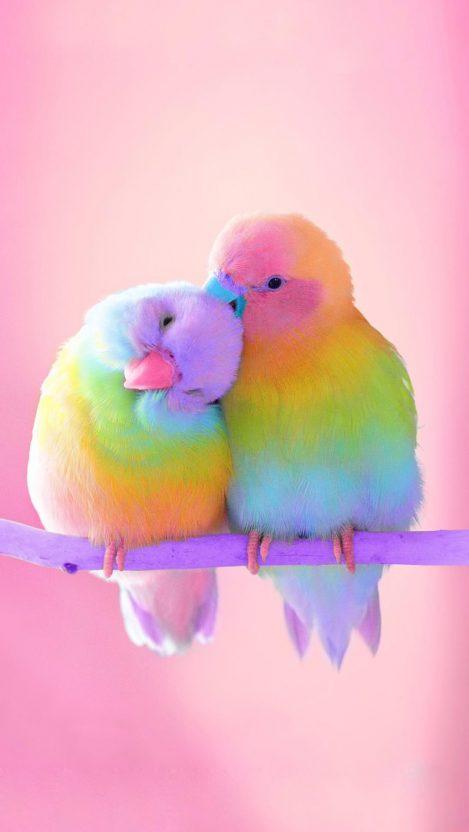 Cute Parakeet Wallpaper Snowball Cute Bunny Secret Life Of Pets Iphone Wallpaper