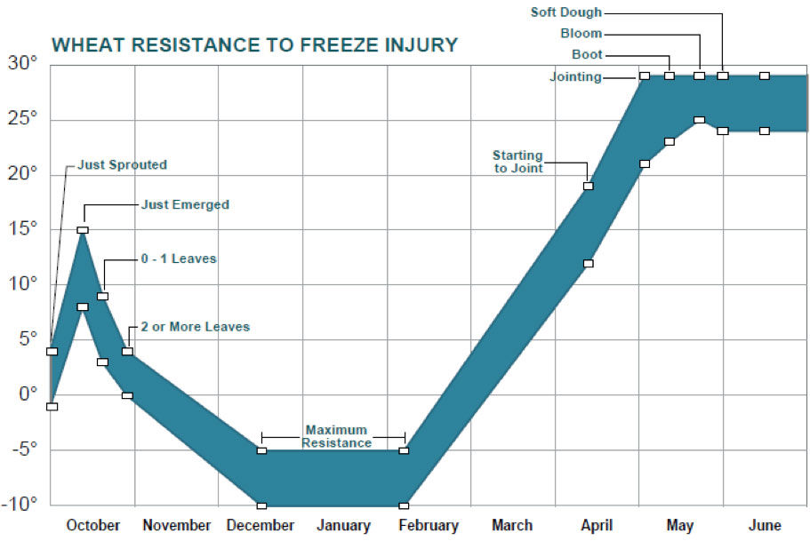 Understanding Wheat Growth Stages for Estimating Wheat Freeze Injury