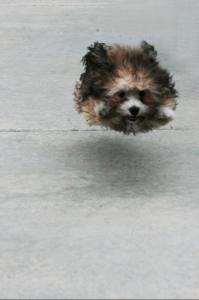 Air-dog - floating dog - airdog