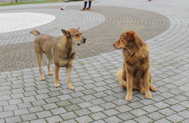 stray dogs ngong ping