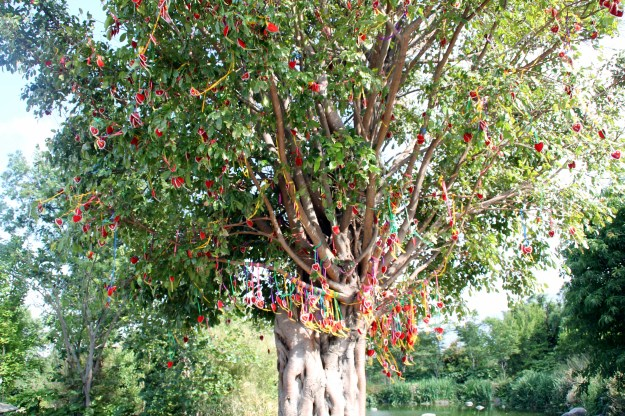 congsheng temple ground tree with hearts