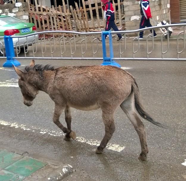 ganzi donkey