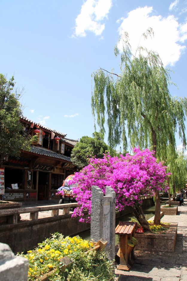 lijiang flowers china