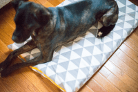 Dog Bed Sewing Pattern | AllFreeSewing.com
