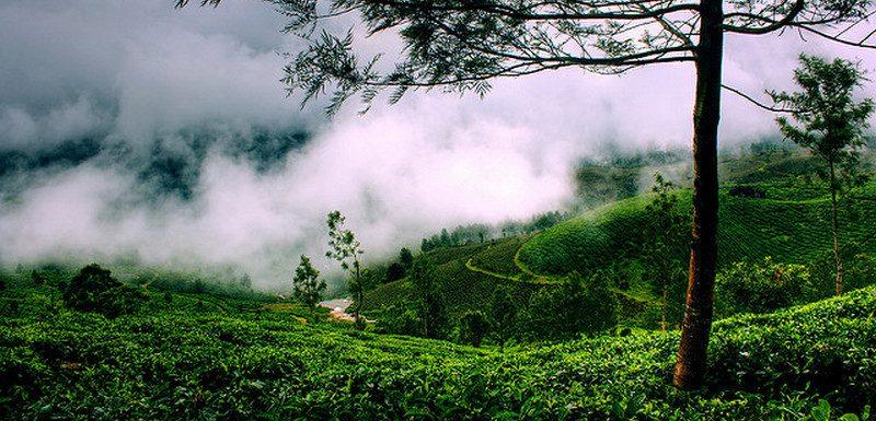 Nechar Wallpaper 3d Top 8 Hill Stations In Kerala Kerala Tourism Blog