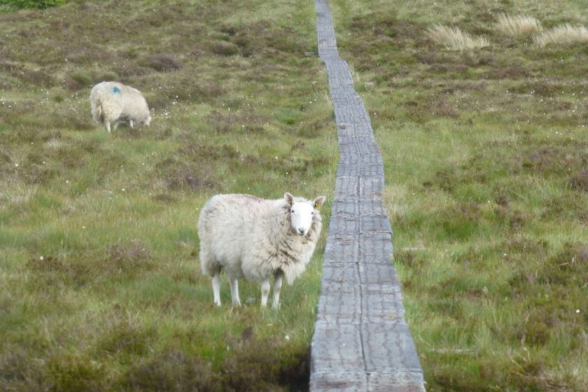 Glendalough Wandern