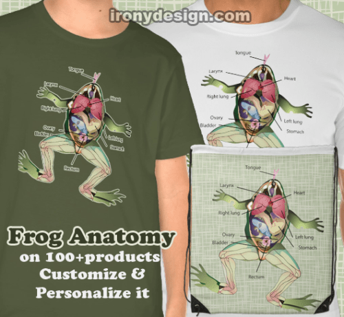 The Frog's Anatomy Design Merchandise