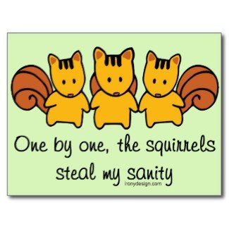 One By One The Squirrels Gifts
