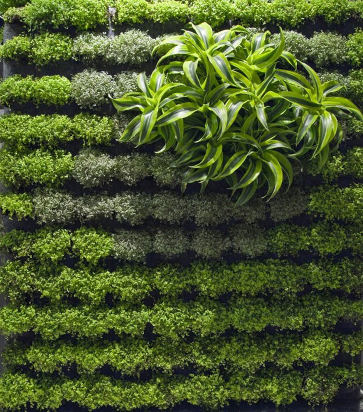 Vertikal Gardinen Applicative Vertical Garden Designs Iroonie