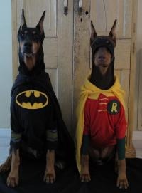 IRTI - funny picture #2627 - tags: batman robin dog ...
