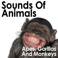 Hanuman Langur Squawks and Barks Pro Sound Effects Library MP3