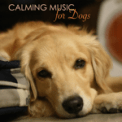 Free Download Pet Music World Calming Music for Dogs Mp3