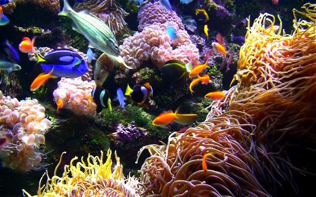 Clown Fish Hd Wallpaper Iphone 4 Aquarium Live Hd Screensaver On The Mac App Store