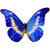 Thiet Duong - Butterfly Beautiful アートワーク