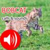 Jing Ren - Bobcat Real Hunting Calls & Sounds アートワーク