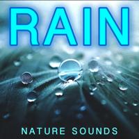 Rain Birds (Forest Nature Sounds) Nature Sound Meditations