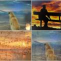 Free Download Lostdog Silent Moments Mp3
