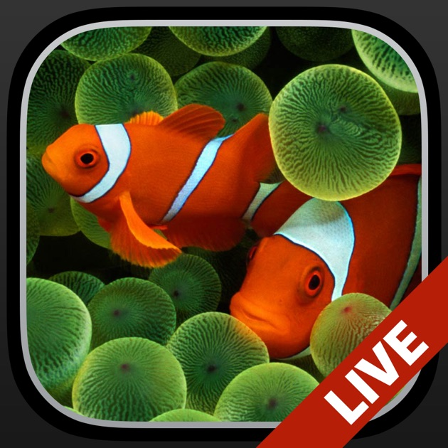 Apple Clownfish Wallpaper Iphone X Aquarium Fonds D 233 Cran Anim 233 S Dans L App Store