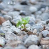 有安杏果(ももいろクローバーZ) - 小さな勇気 アートワーク