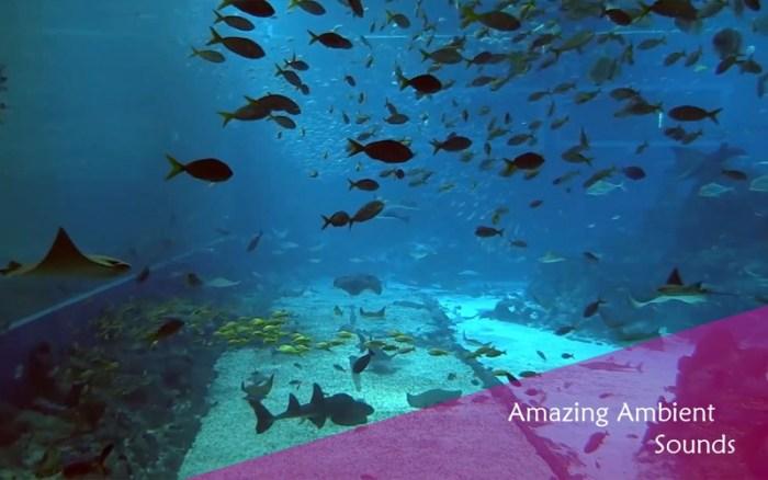 5_Chill_Relax_Aquarium_Cay_Fish_Tank_HD_Video.jpg