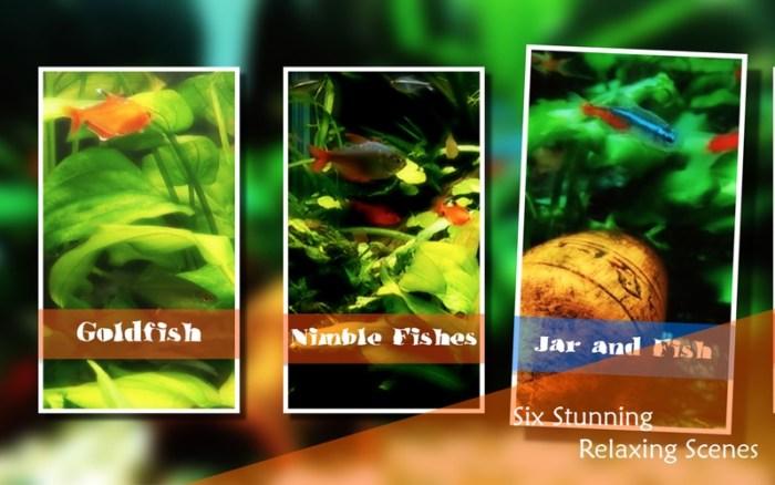 2_Chill_Relax_Aquarium_Cay_Fish_Tank_HD_Video.jpg