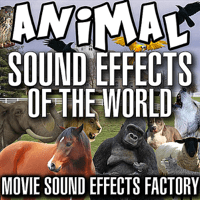 Goat Sound Effect Movie Sound Effects Factory MP3