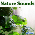 Free Download Sounds of Nature Rain Sounds Mp3