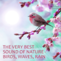 Free Download Life Sounds Nature Amazing Concert of Wind Chimes With Birds For Relaxation, Massage, Meditation Mp3