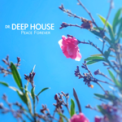 Free Download Dr. Deep House Approaching Ibz Mp3