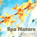 Free Download Nature Balance & Spa Music Collective Kiss the Rain Mp3