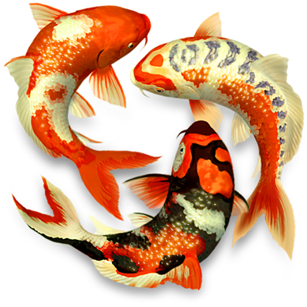 Iphone X 3d Touch Wallpaper Koi Pond 3d On The Mac App Store