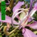 Free Download Avalon Emerson One More Fluorescent Rush Mp3