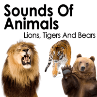 Female Tiger Roars Pro Sound Effects Library MP3