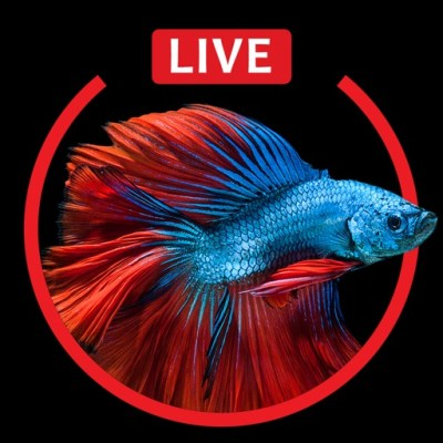 Aquarium Live HD Wallpapers for iphone 6s & 6s Plus Par Fexy Apps