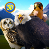 Andrew Kudrin - Wild Bird Survival Simulator Full アートワーク