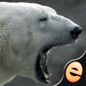 Jigsaw Wonder Polar Bears for Kids
