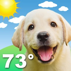 Cute Wallpapers For Iphone 6 Weather Puppy Forecast Dogs On The App Store