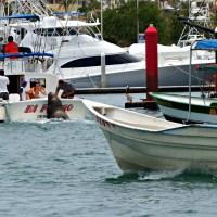 Weekly Photo Challenge - (Extra) Ordinary Sea Lion