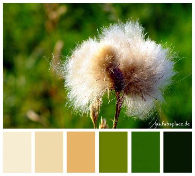 Colors: Natural Fur