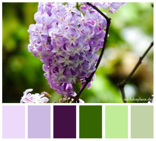 Colors: Purple Creativity