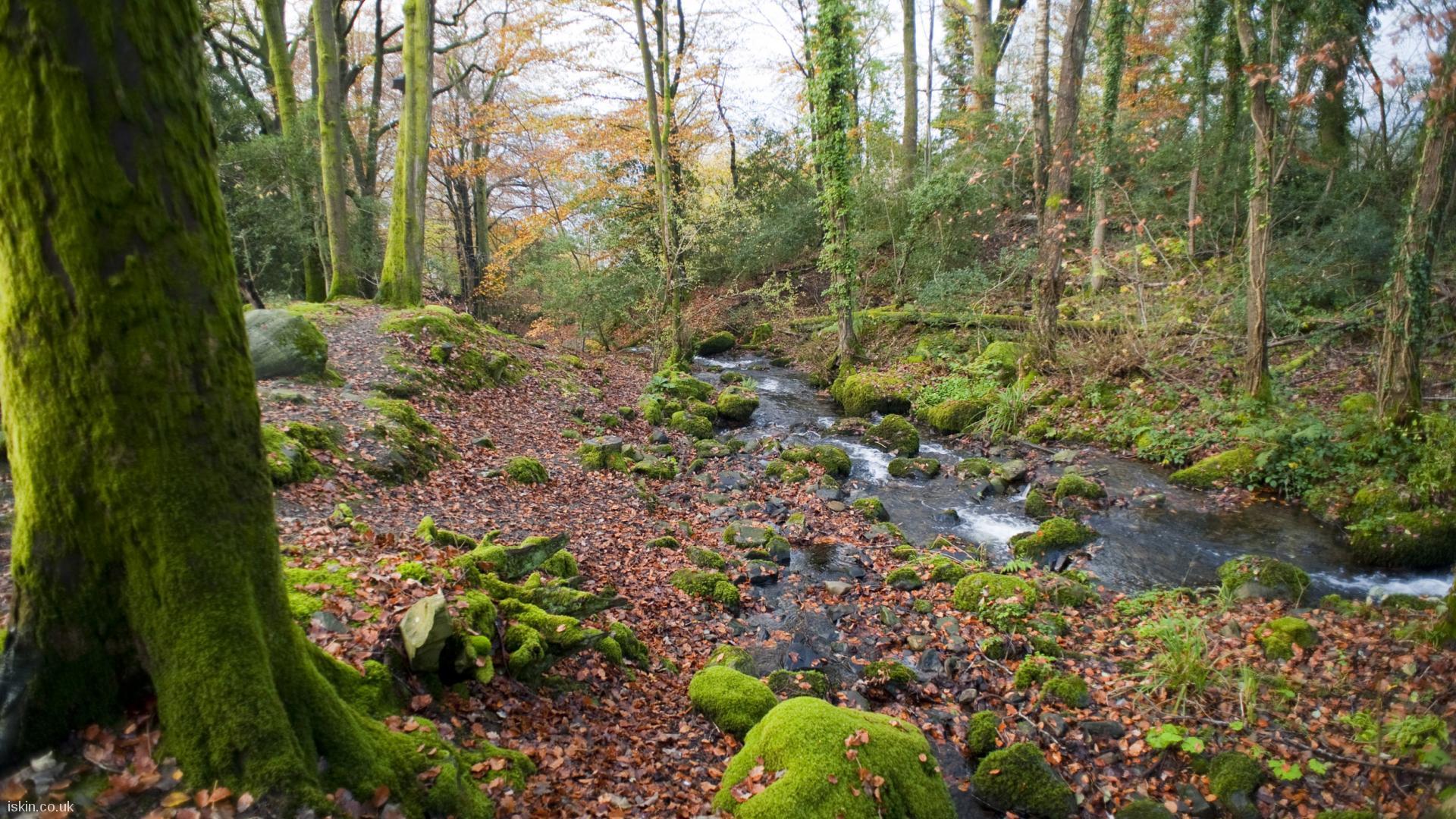 Free Fall Wallpaper For Ipad Autumn Woodland Stream Desktop Wallpaper Iskin Co Uk