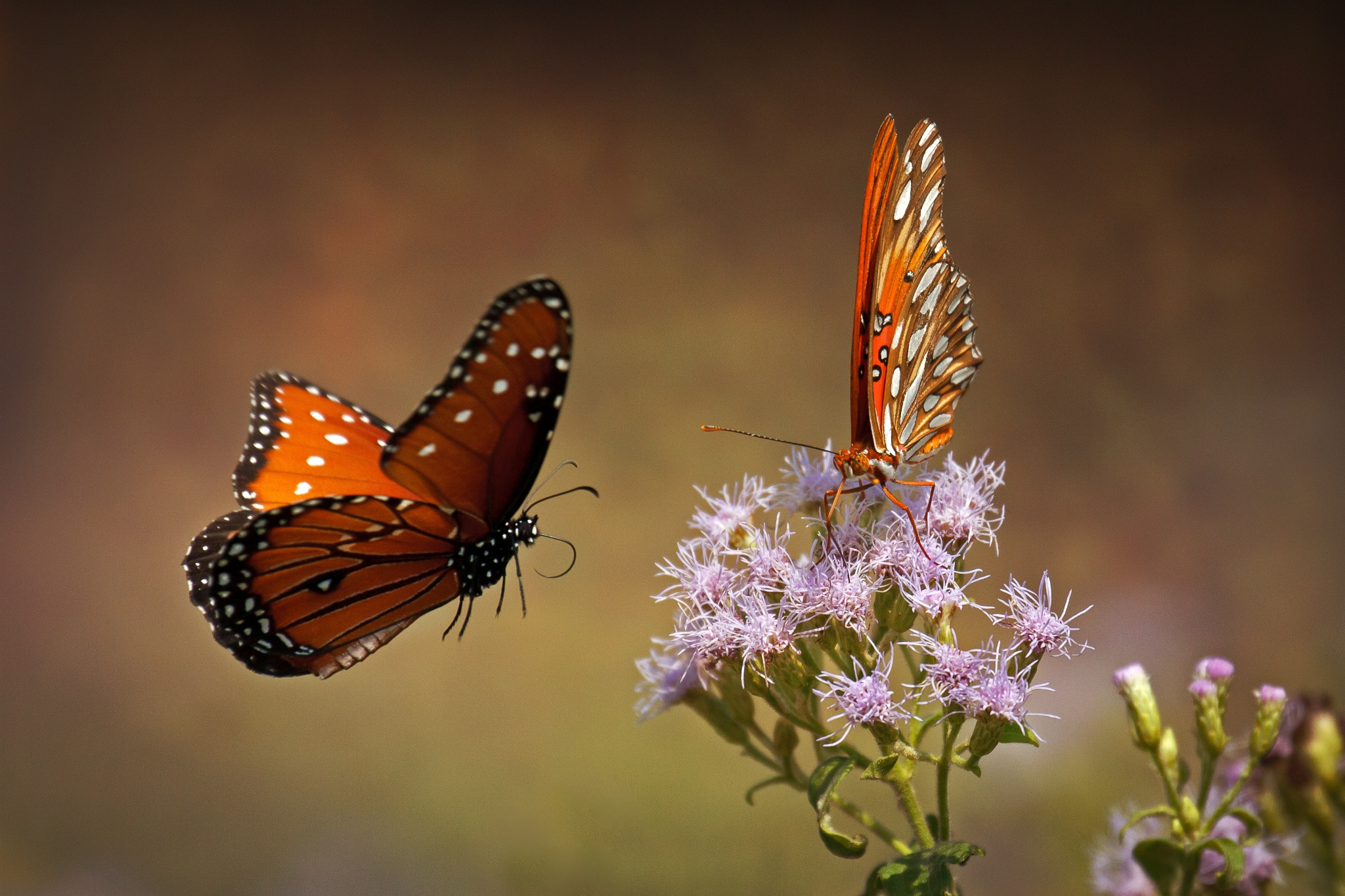 Beautiful Butterfly Girl Wallpaper 500px Blog 187 The Passionate Photographer Community 187 50