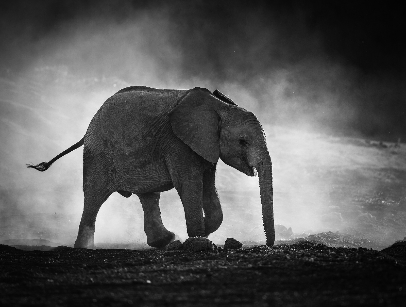 Black And White Artwork For Bedroom 500px Blog Tips And Tricks For Black And White Wildlife