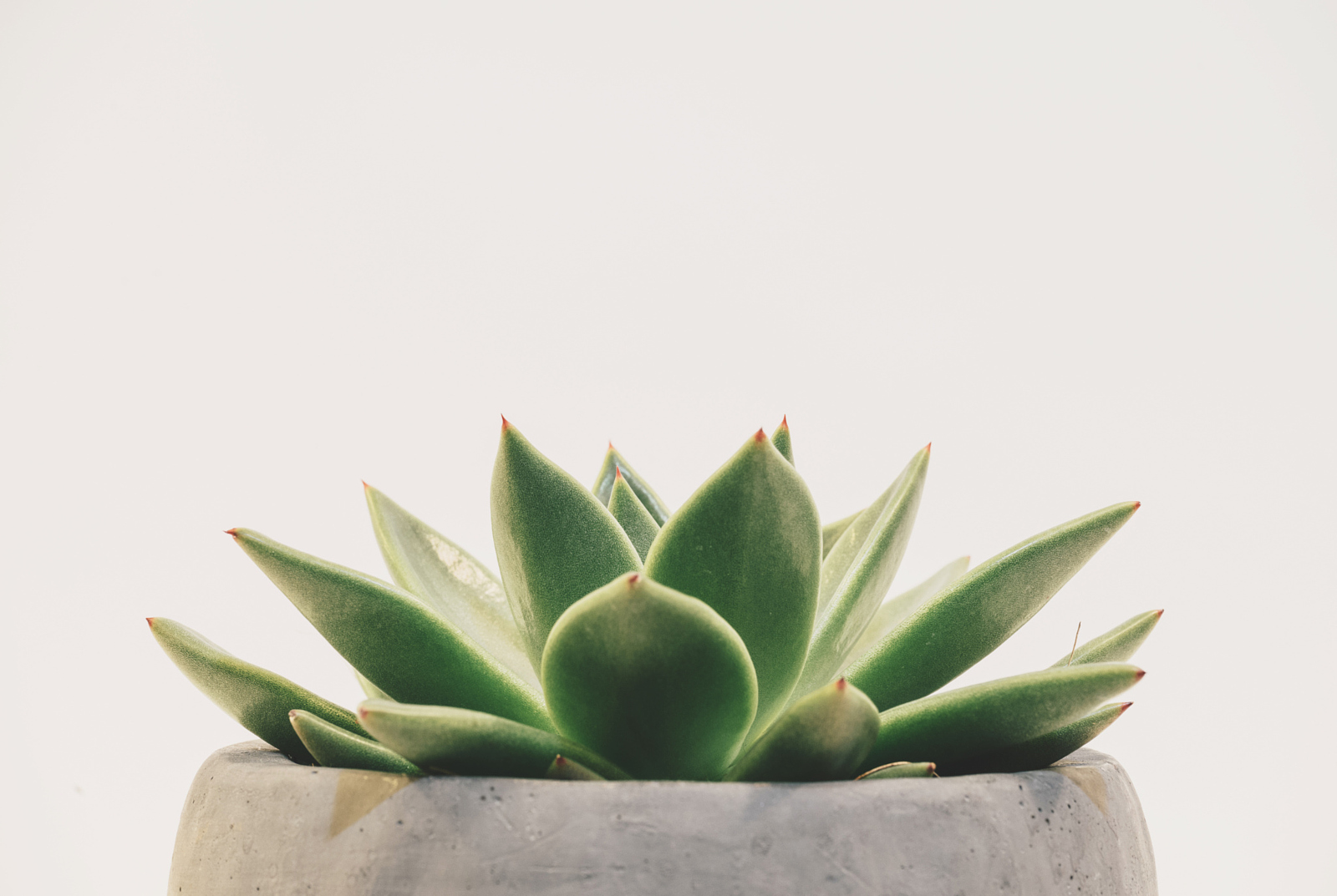 Cute Cactus Wallpaper Macbook 500px Blog 187 187 Grab Your Audience With Clean Minimalist
