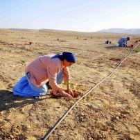 Planting. What a feeling! Hodu LaShem Ki Tov!