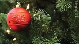 Christmas ornament on tree