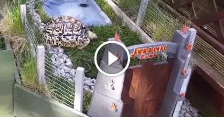 turtles-thumb