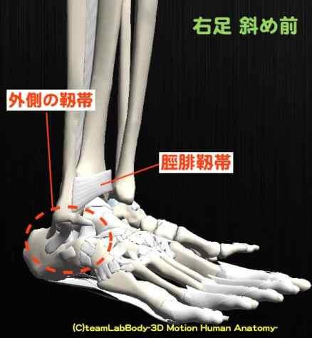 脛腓靱帯-min